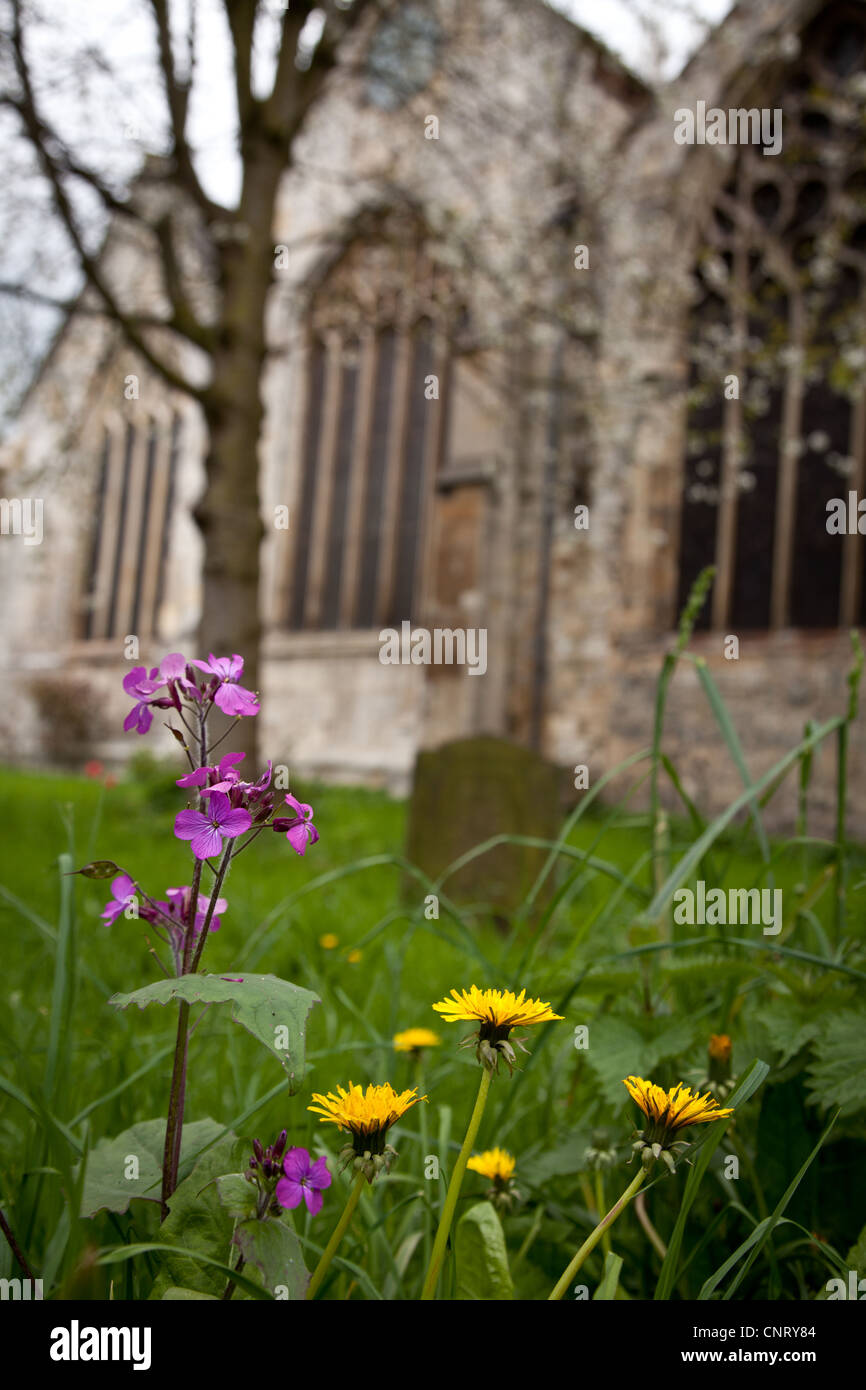 St Denys Chuech, Walmgate York, with foreground flowers - Stock Image