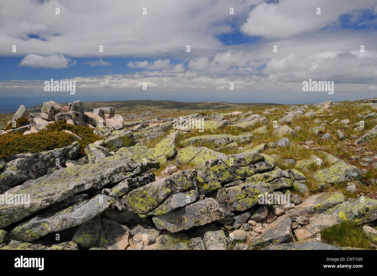 steppe in the summit region of the Serra da Estrella, Portugal, Naturpark Serra da Estrella - Stock Image