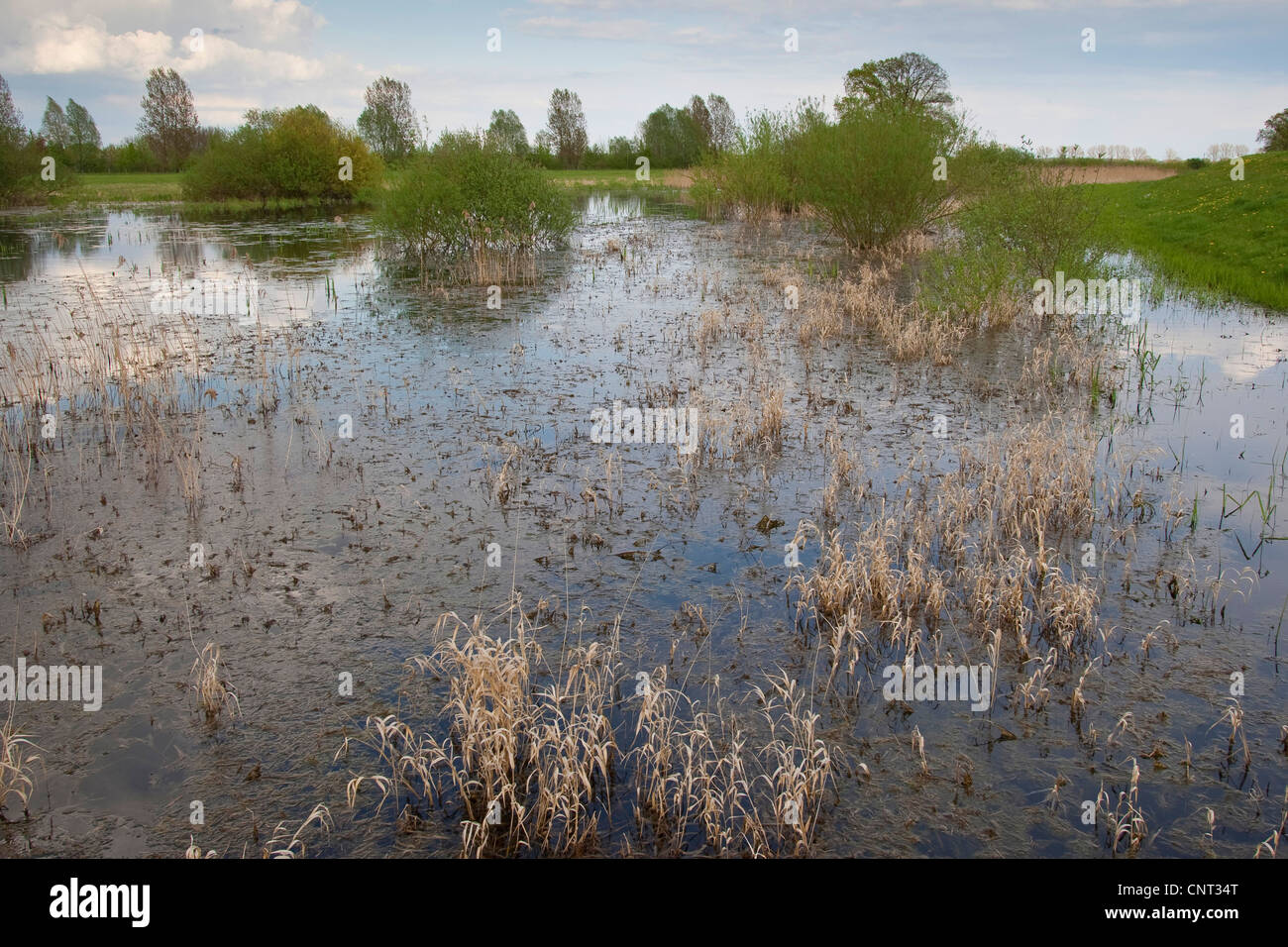 temporary spawning pool for treefrogs and firebelly toads, Germany - Stock Image