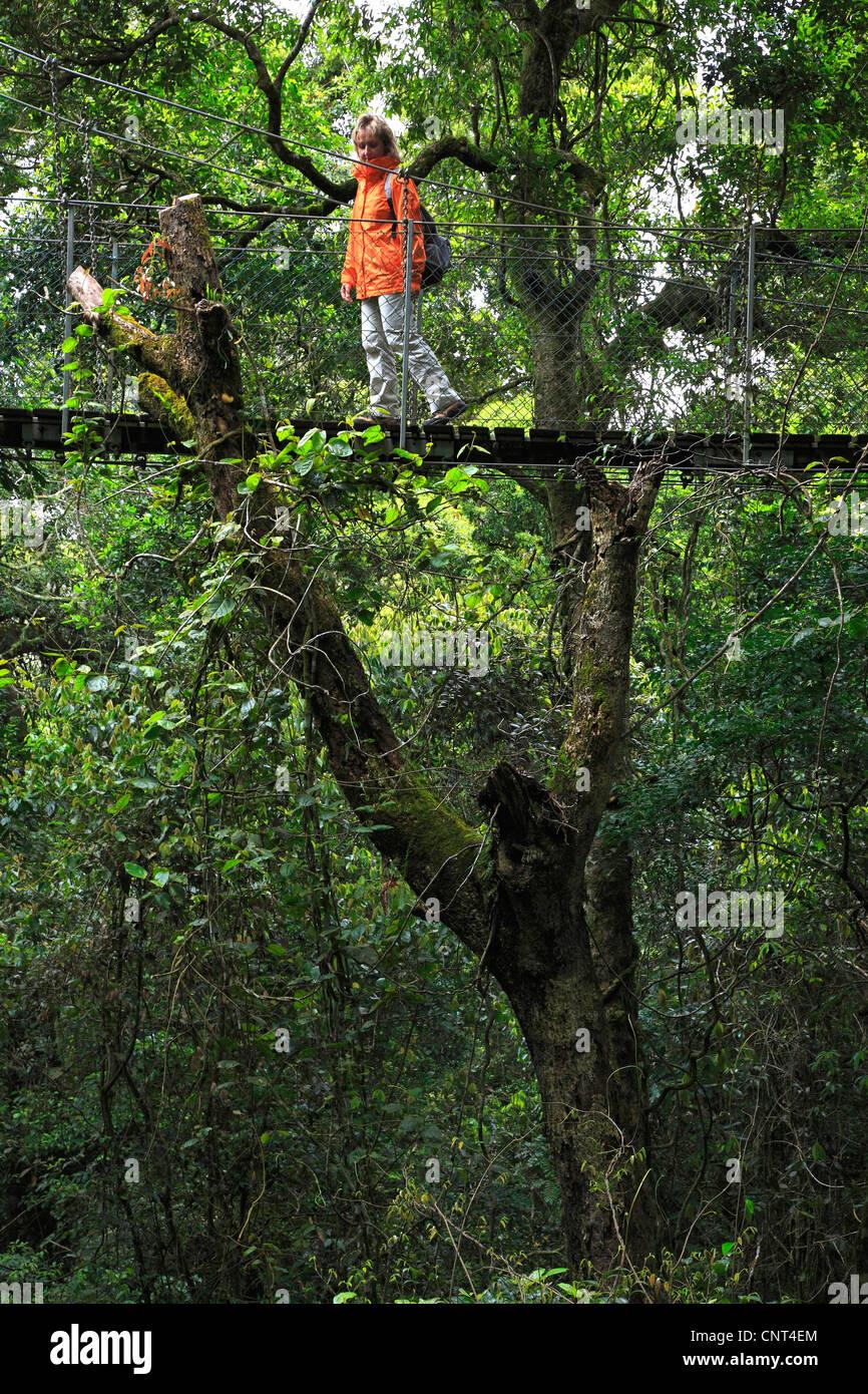 Rainforest Canopy Walk, Green Mountains, Australia, Queensland, Lamington National Park Stock Photo