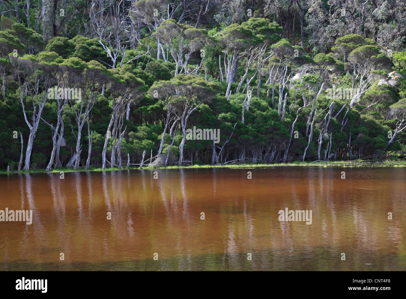 Tidal River in the Wilsons Promontory National Park, Australia, Victoria, Wilsons Promontory National Park - Stock Image