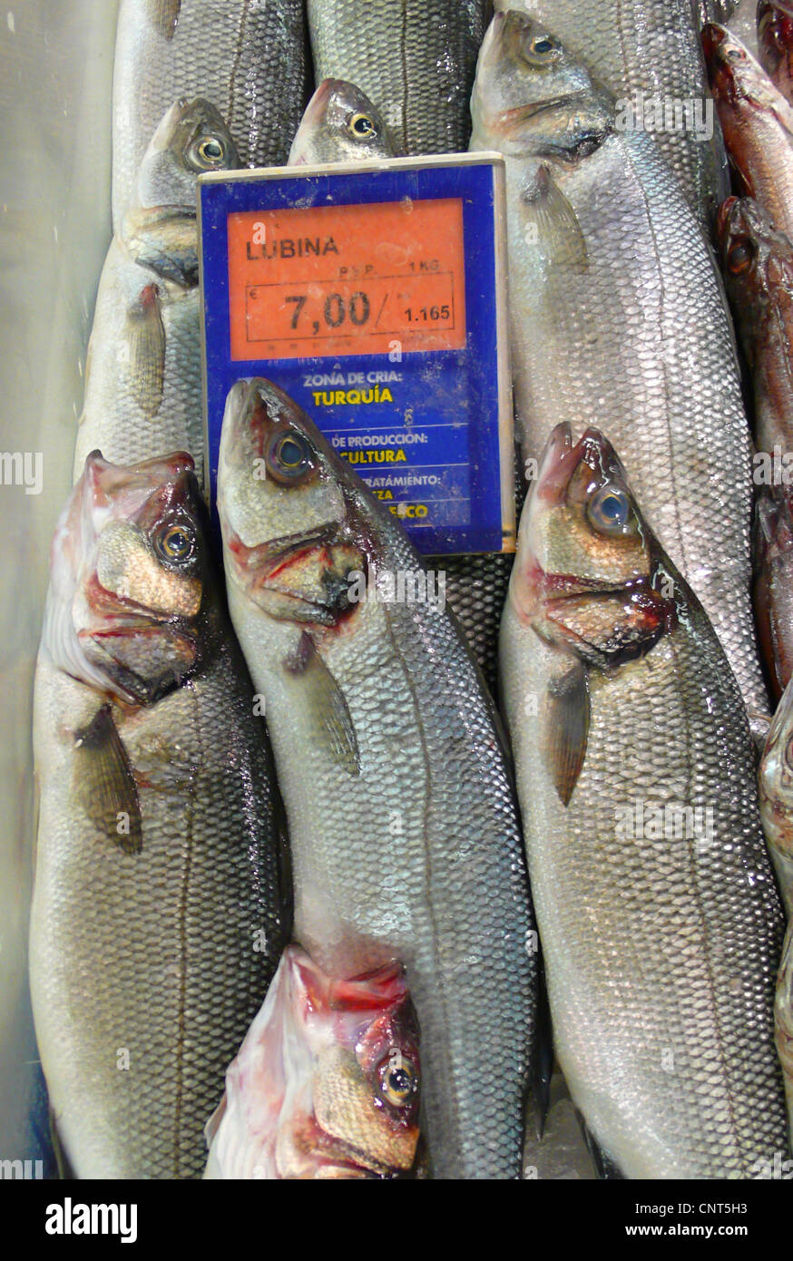 temperate perches, temperate basses (Percichthyidae, Moronidae), temperate basses from Turkey on a market in Alcudia, - Stock Image