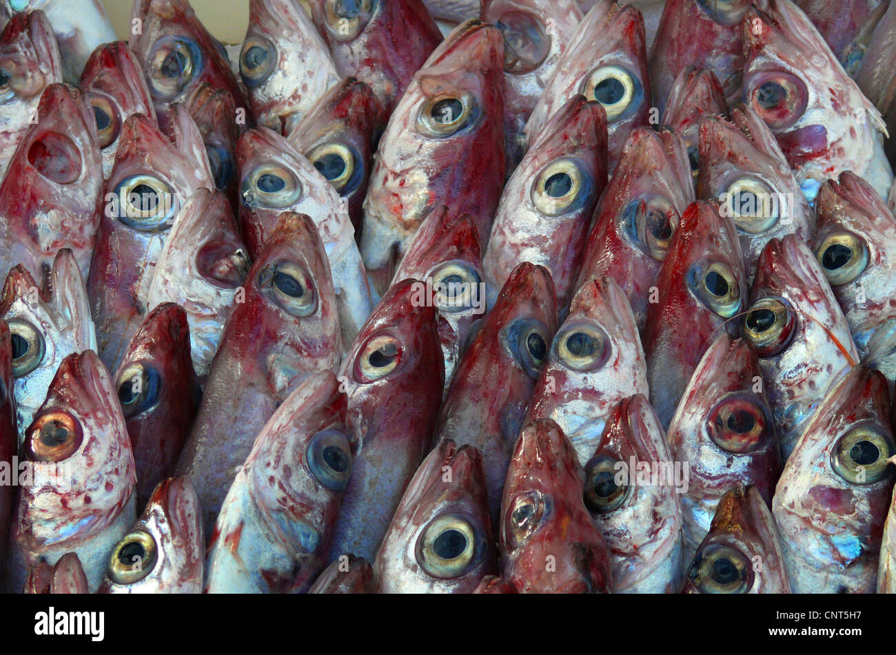 red edible fishes on a market, Spain, Balearen, Majorca, Alcudia - Stock Image