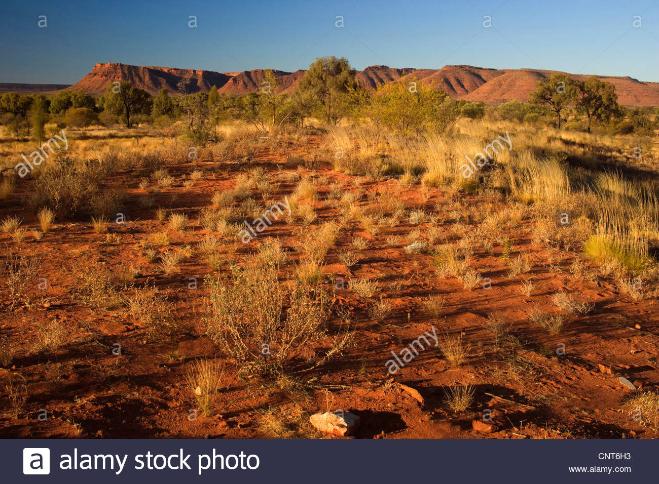 Kings Canyon - red earth, bushland and by sun red ablaze rim cliffs of Kings Canyon in late evening, Australia, - Stock Image