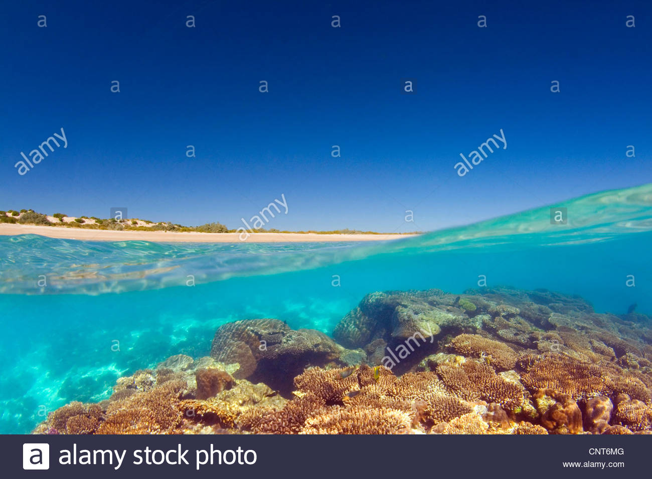 Coral reef and beach - split-level shot of a coral reef and white, sandy beach , Australia, Western Australia, Ningaloo - Stock Image
