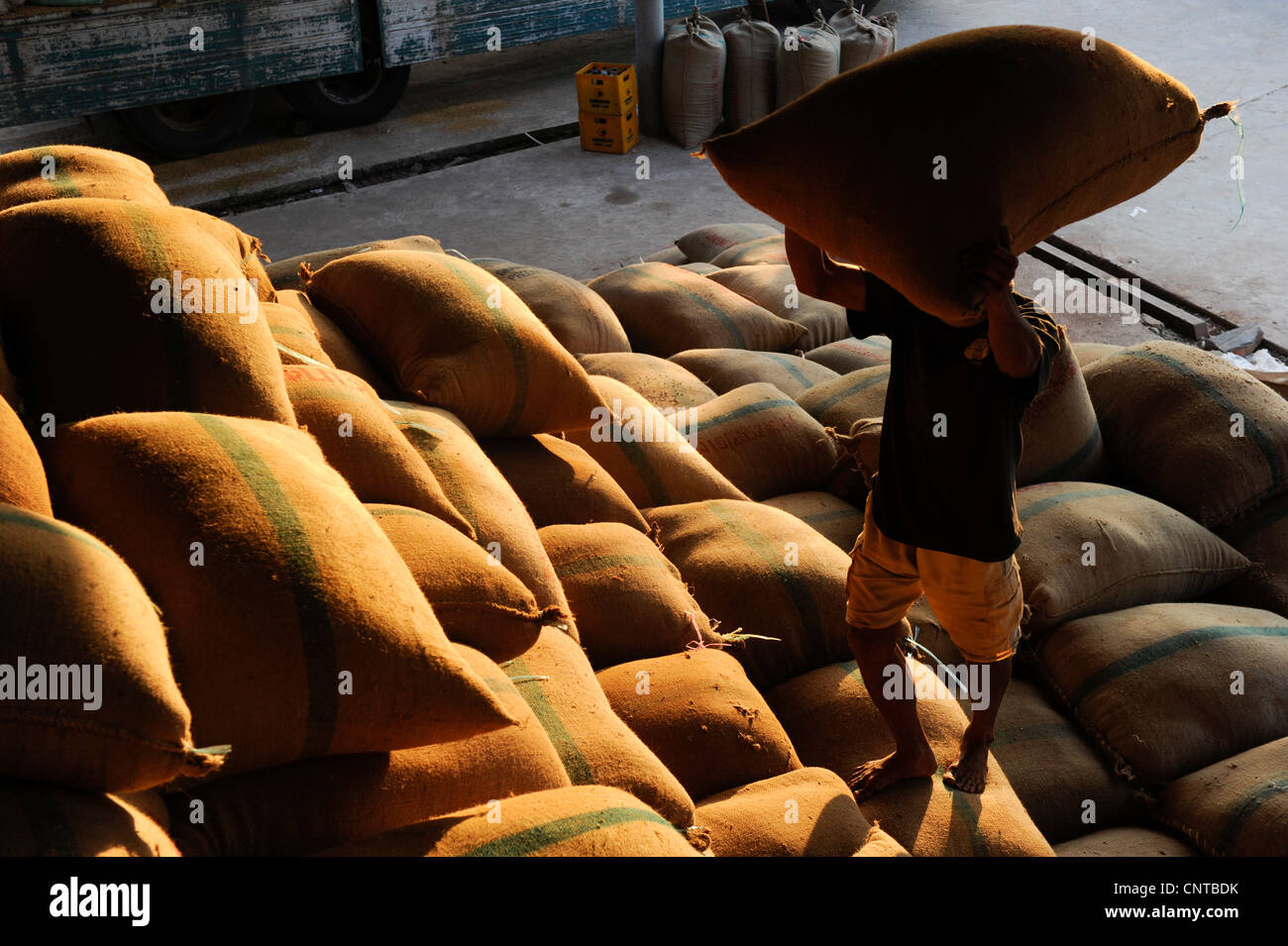 Laos Vientiane rice mill Chengsawang exp-imp co Ltd. , arrival of paddy after harvest for milling - Stock Image