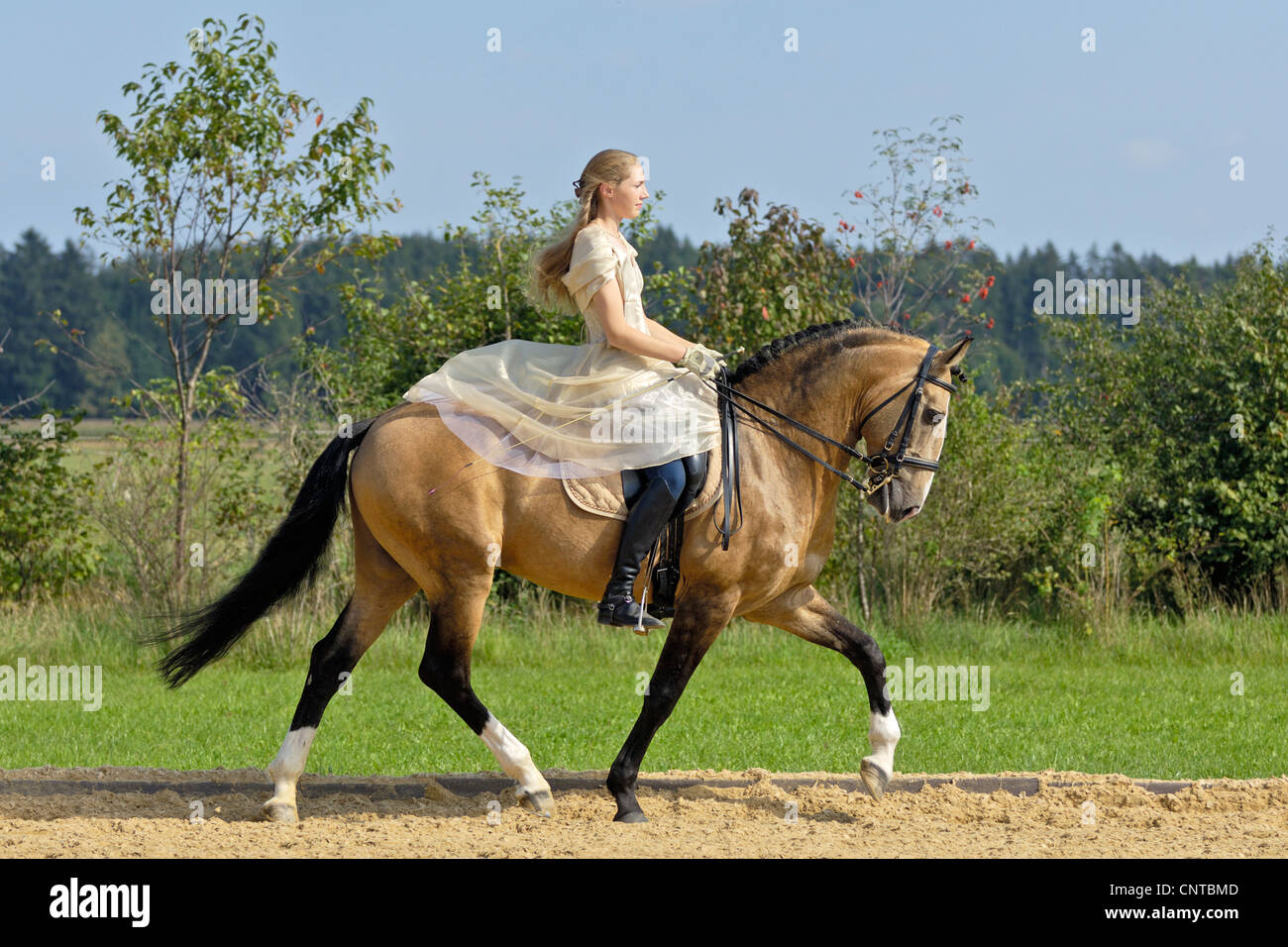 Girl wearing a historic dress riding on a Lusitano horse stallion - Stock Image