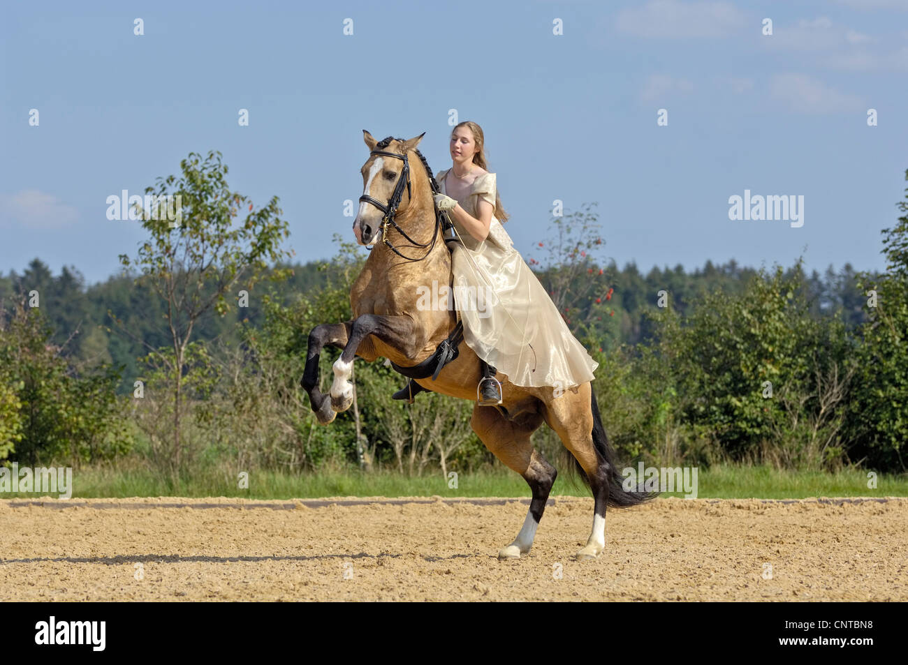 Girl wearing a historic dress on a rearing Lusitano horse stallion (circus exercise) - Stock Image