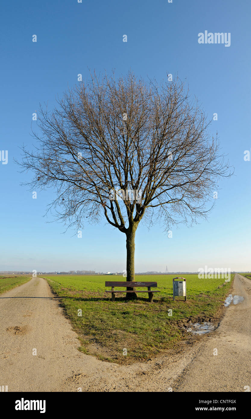 single tree with bench in a parting of the ways, Germany, North Rhine-Westphalia, Lower Rhine - Stock Image