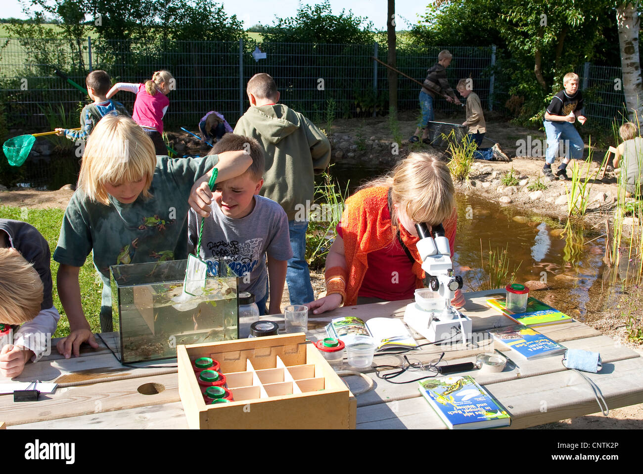 primary school pupils watching animals in an aquarium and under a microscope caught in the self-built pond in the - Stock Image