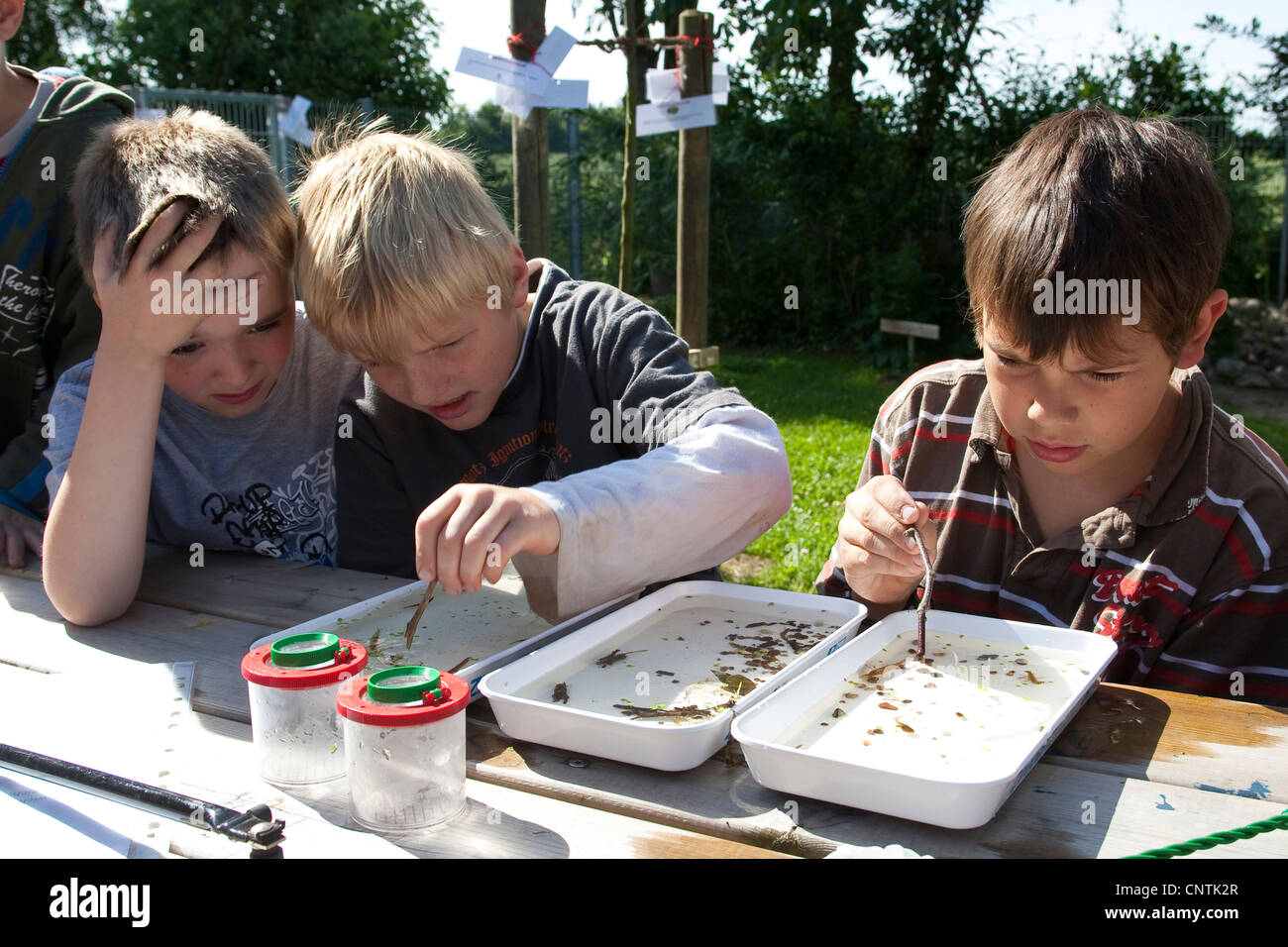 primary school pupils watching animals caught in the self-built pond in the school garden in waterbowls - Stock Image