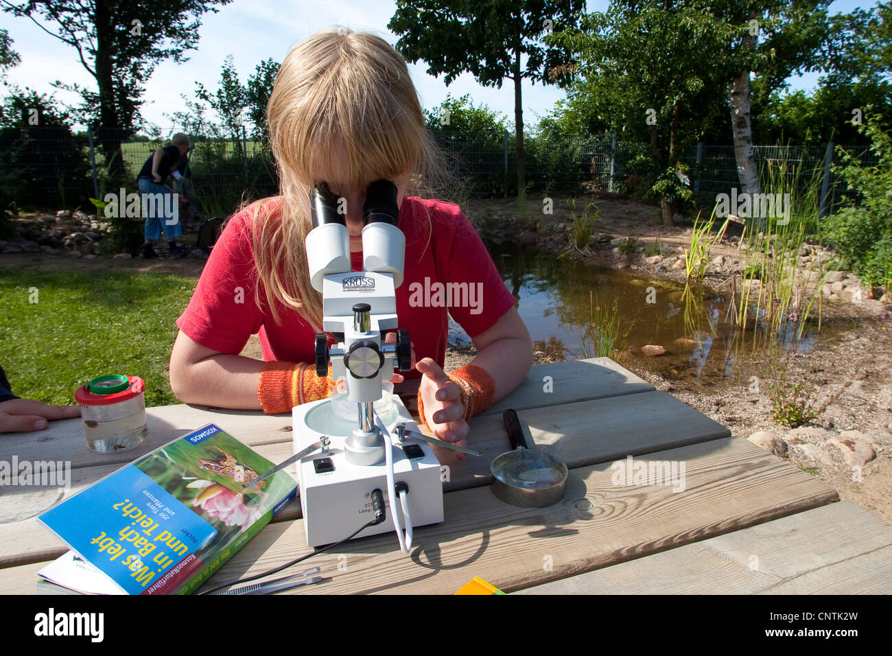 primary school pupil watching animals caught in the self-built pond in the school garden through a microscope - Stock Image