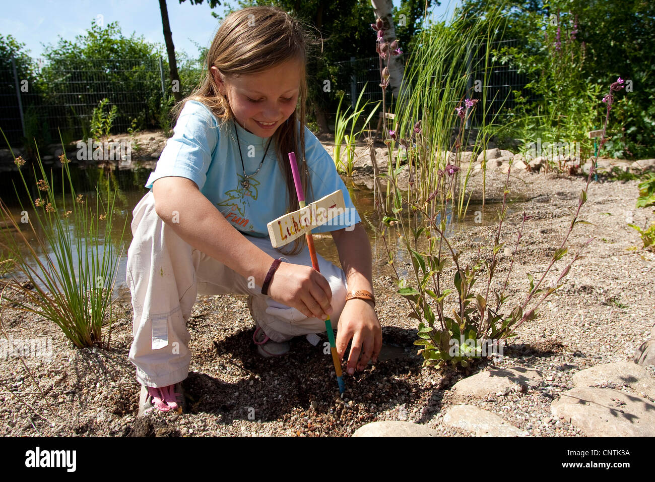 primary school pupil installing a name plate beside a silene at a self-built pond in the school garden - Stock Image