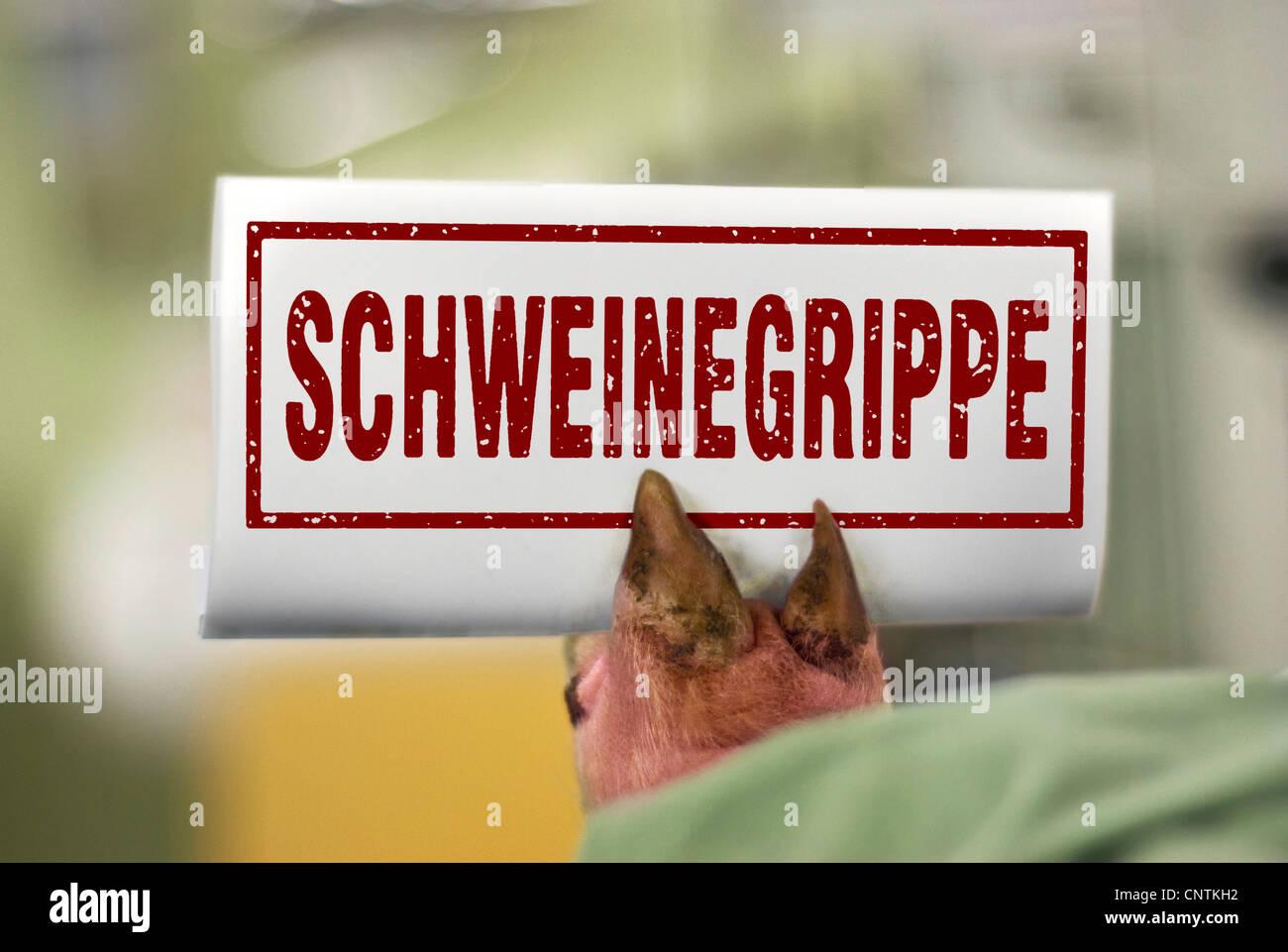 symbolic for swine influenza, Germany - Stock Image