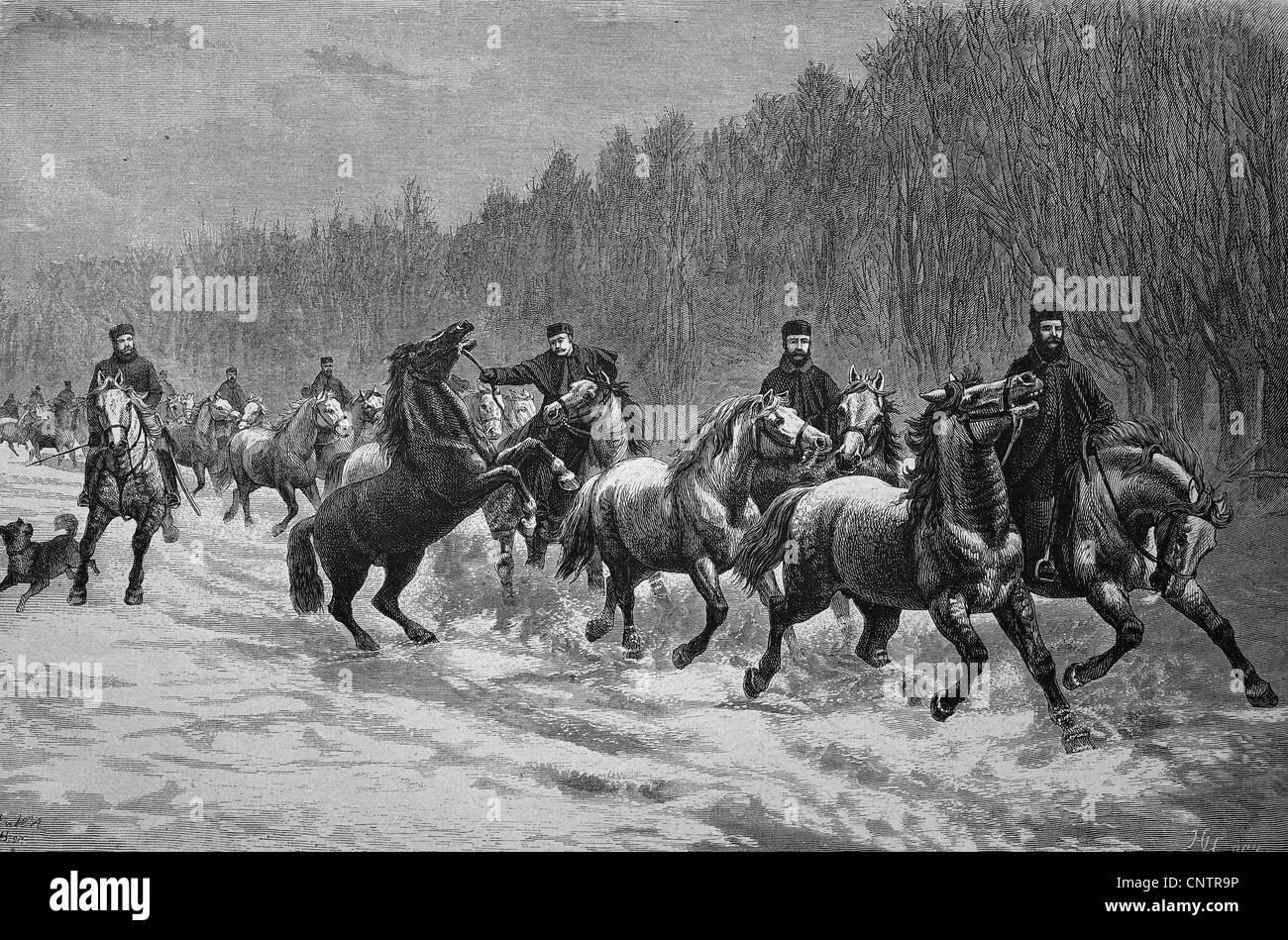 Winter promenade of North American artillery horses, historical woodcut, circa 1870 - Stock Image