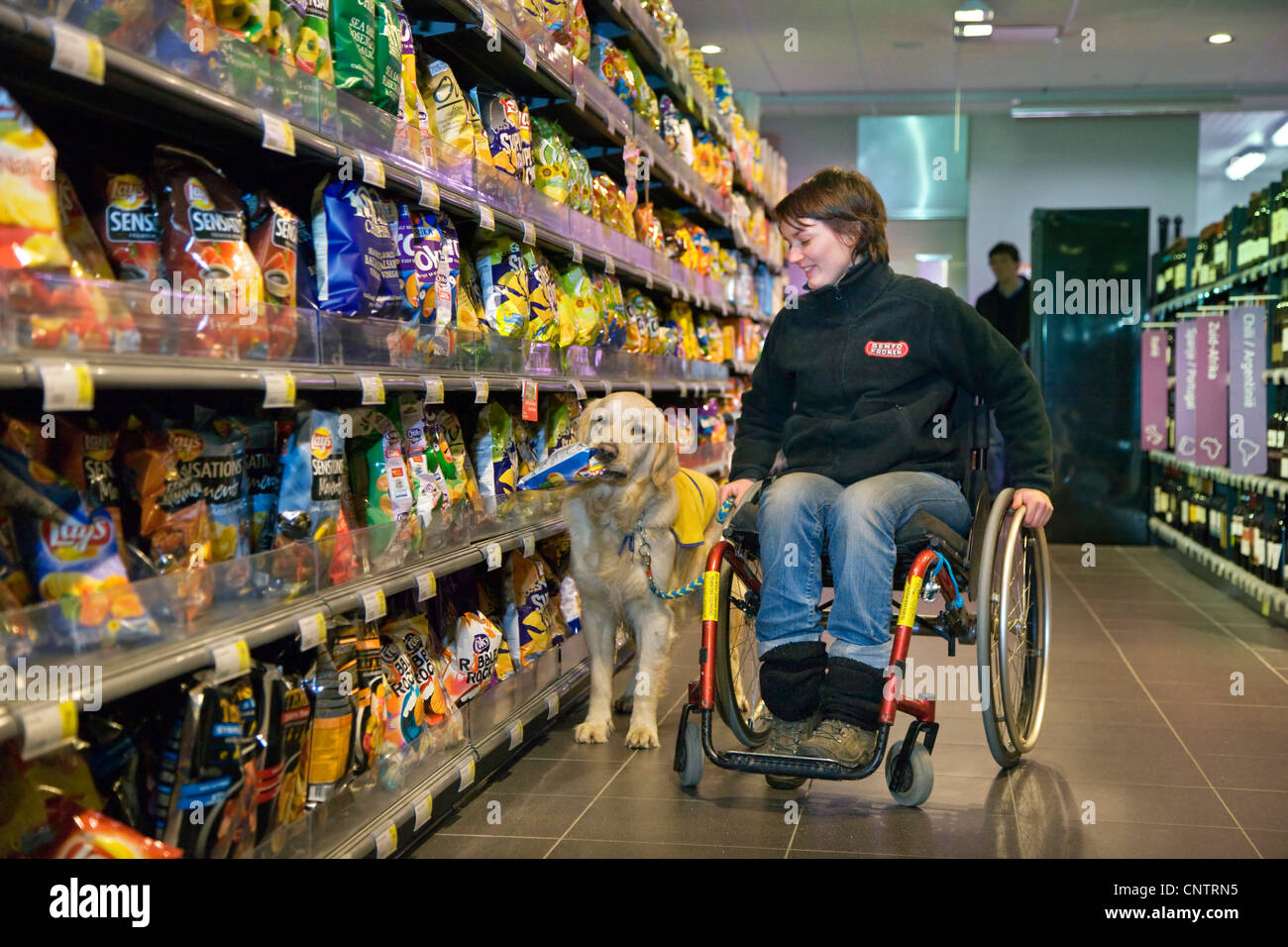 Invalid and physically disabled person in wheelchair shopping with Labrador mobility assistance dog in supermarket, - Stock Image