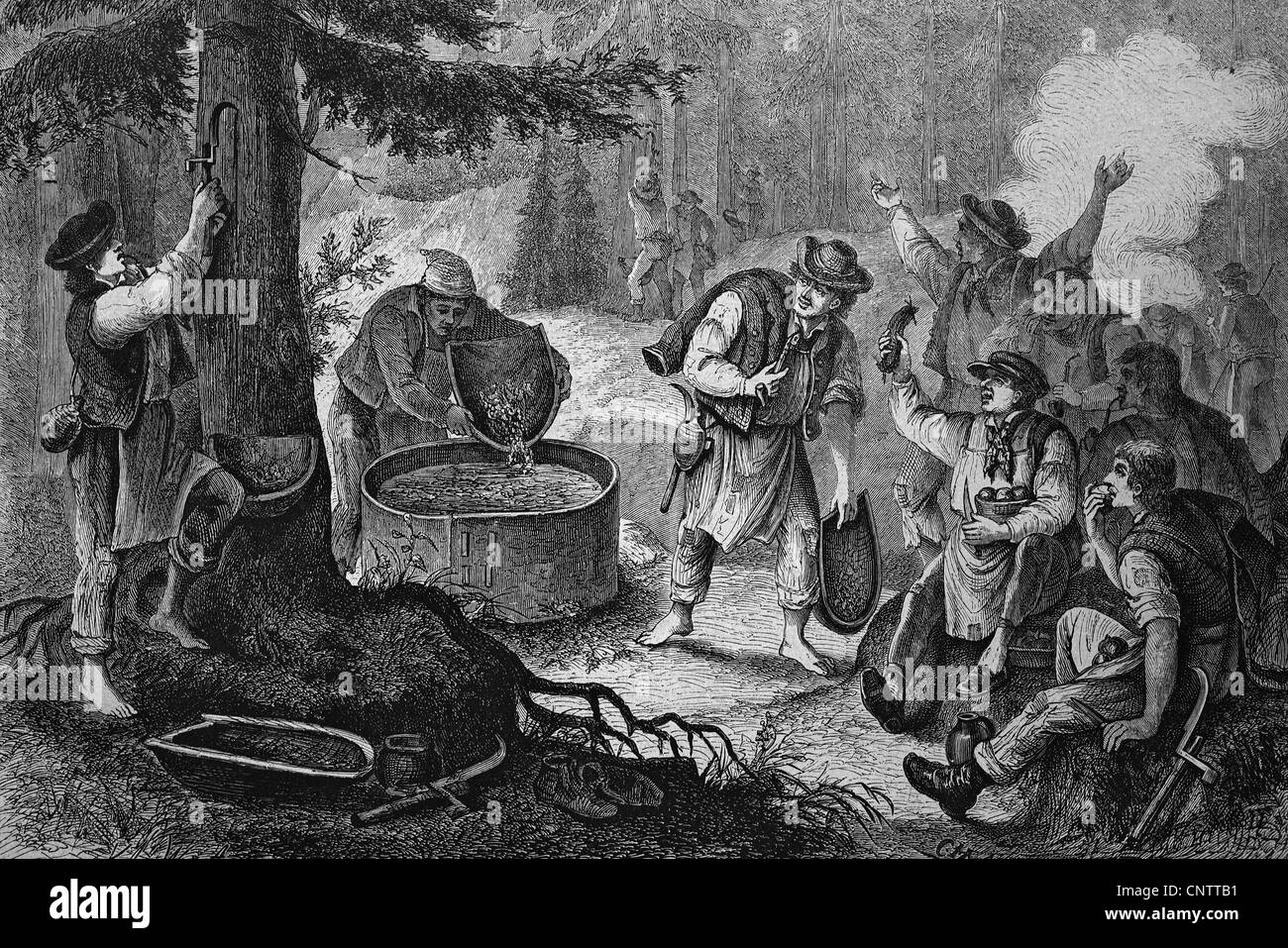 Pitchers boiling pitch from tree resin in Vogtland, historical engraving, circa 1870 - Stock Image