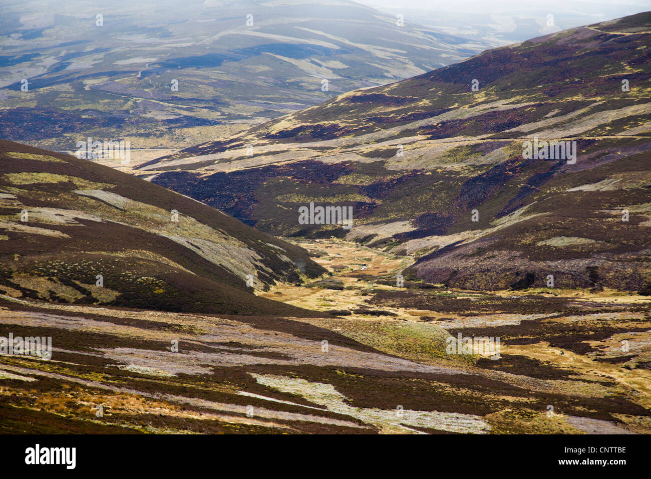 Grouse Moor; Cairngorm; Scotland; UK - Stock Image