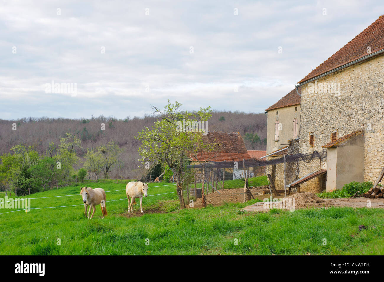 White Horse On A French Farm In The Vallee Du Lot In Southern France Stock Photo Alamy