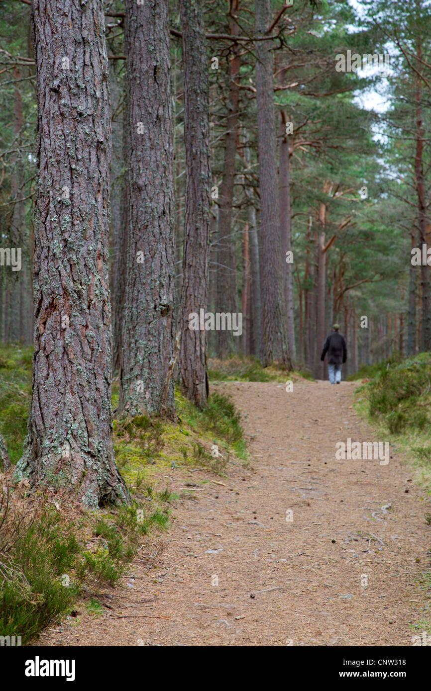 Loch Garten; Cairngorm; Scotland; UK - Stock Image