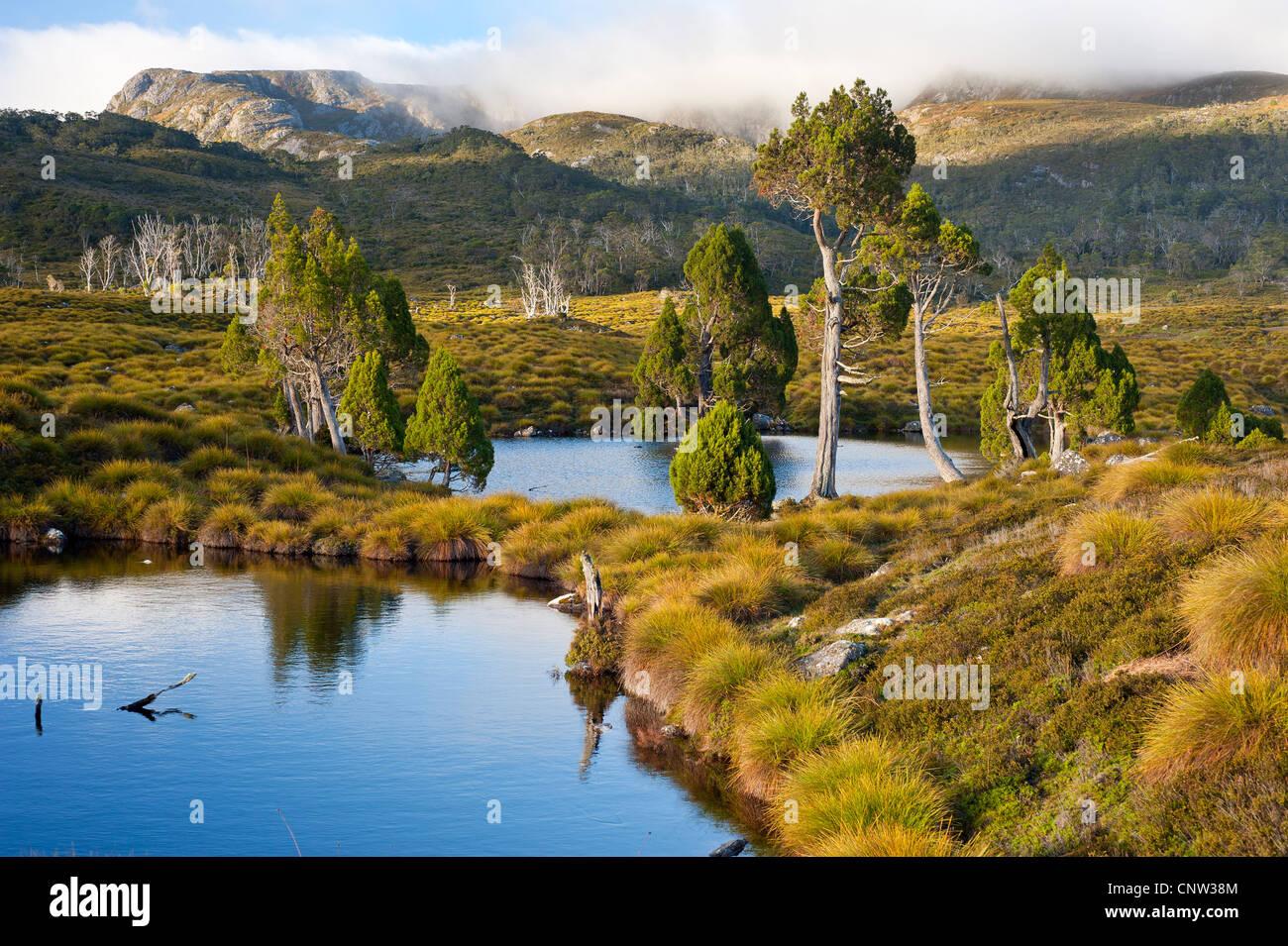 Mountain tarns ringed with Pencil pines in Cradle Mountain - Lake St Clair National Park Tasmania Australia - Stock Image