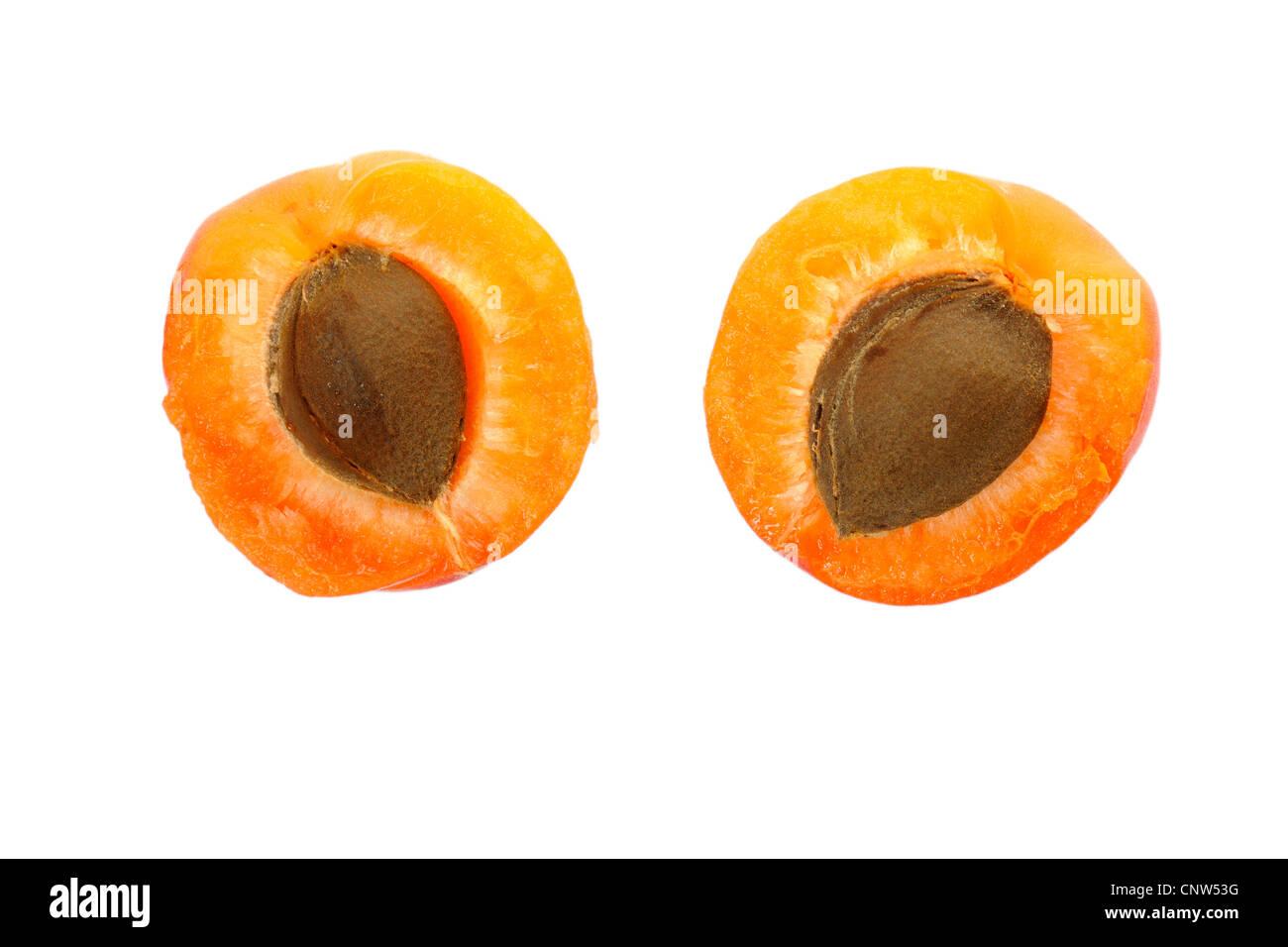apricot tree (Prunus armeniaca), cut apricots - Stock Image