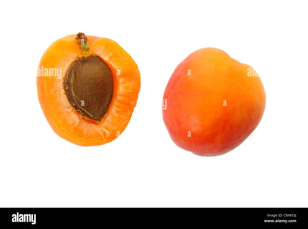 apricot tree (Prunus armeniaca), cut and complete apricot - Stock Image