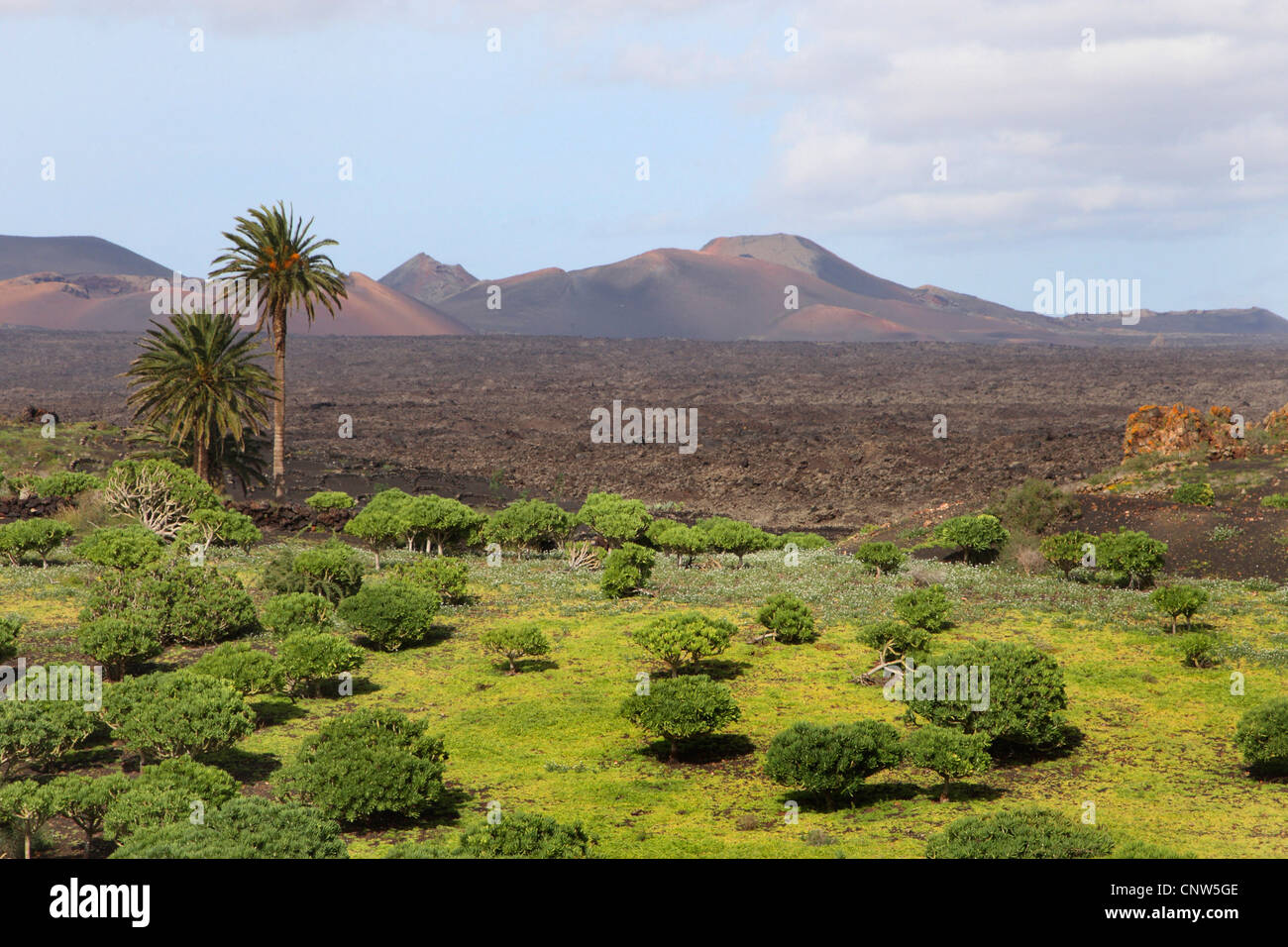 varied volcanic mountain scenery, Canary Islands, Lanzarote - Stock Image