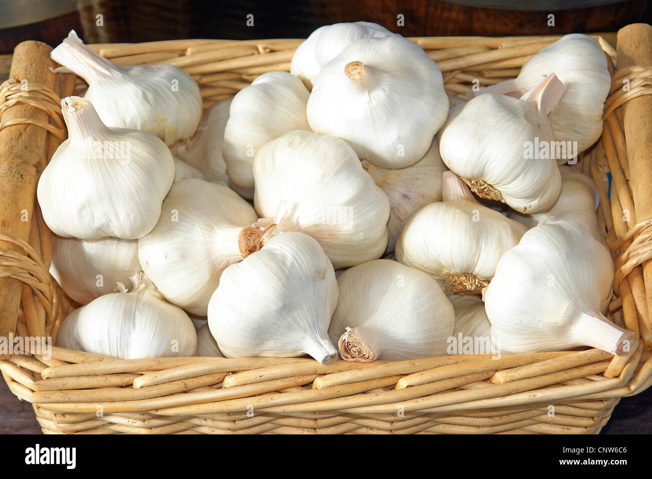 wild leek, elephant garlic (Allium ampeloprasum), Garlic bulbs - Stock Image