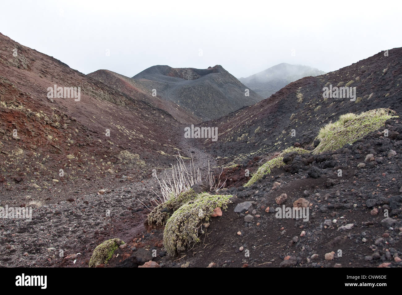 volcanic landscapes at Mount Etna with dwarf shrubs, Italy, Sicilia - Stock Image