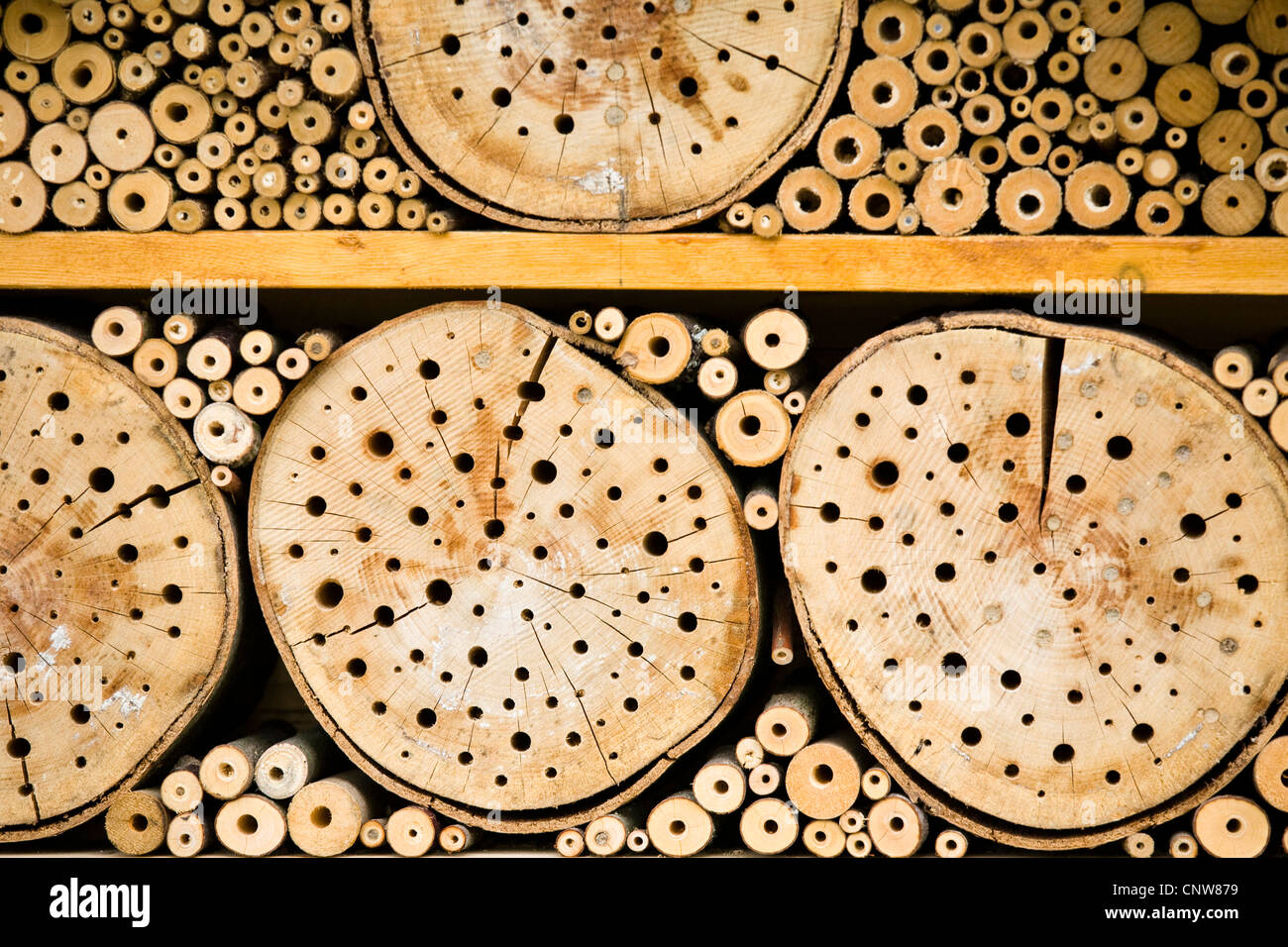 nesting aid for wild bees, Germany, Baden-Wuerttemberg, Bad Rappenau - Stock Image
