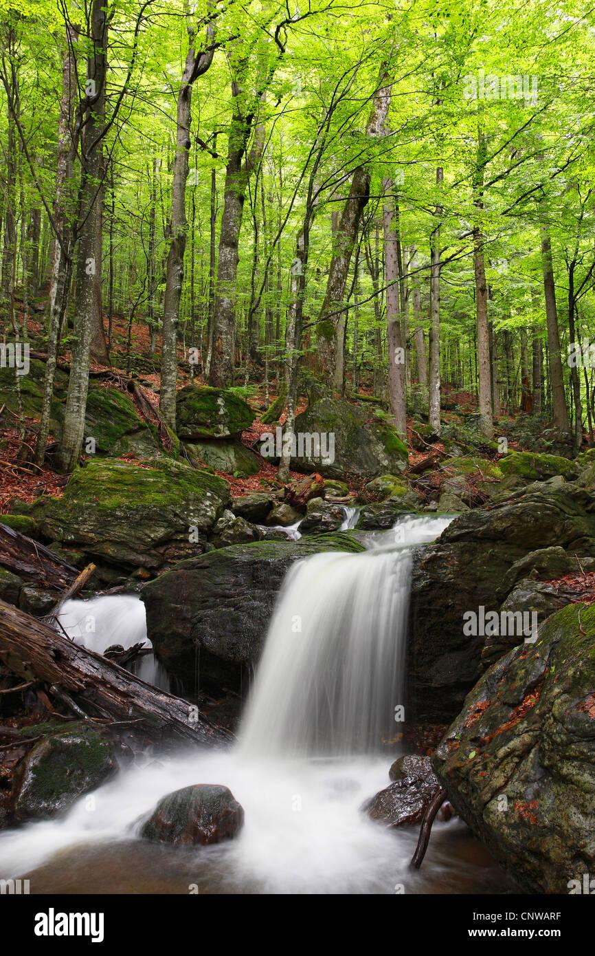 Mountain Stream Hoellbach, Germany, Bavaria, Bavarian Forest National Park - Stock Image