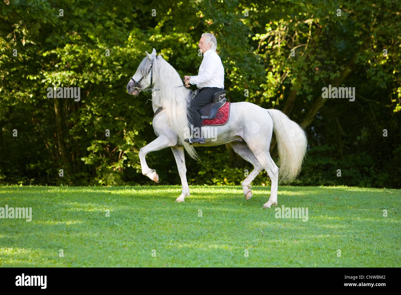 HORSE RIDING | WHITE HORSE RIDING ON ROAD - YouTube |Ride The White Horse