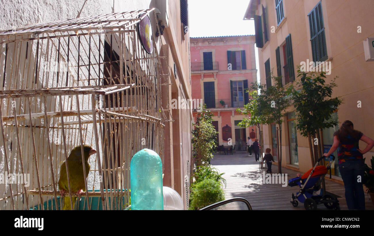 island canary (Serinus canaria), bird in a cage in a lane of Alcudia, Spain, Balearen, Majorca, Alcudia - Stock Image