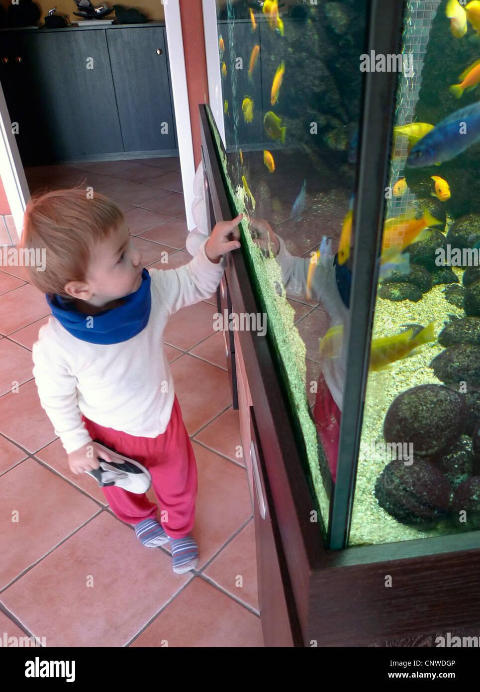 little boy at an aquarium - Stock Image