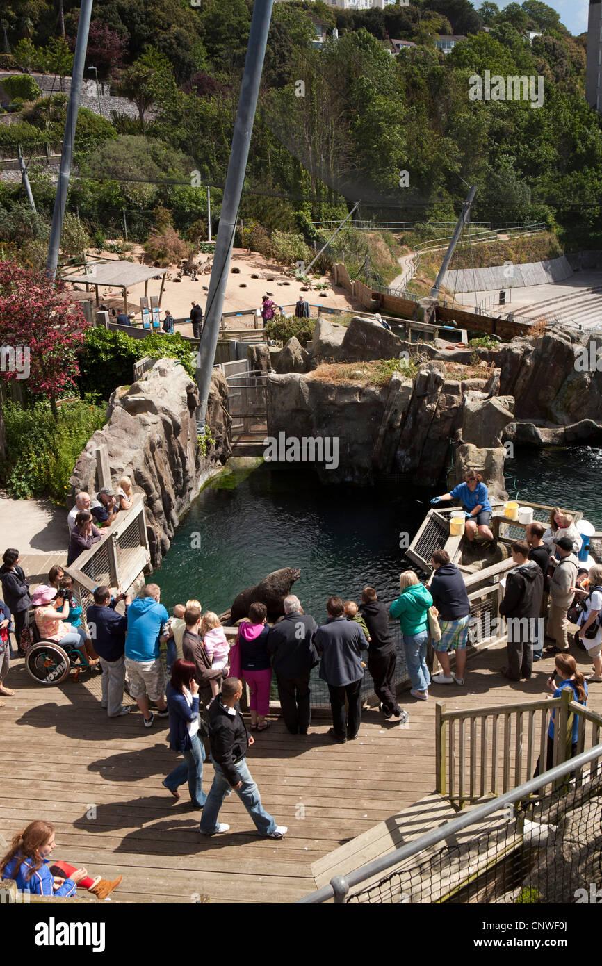 UK, England, Devon, Torquay, Living Coasts, Fur Seal Cove, visitors watching seal at feeding time - Stock Image