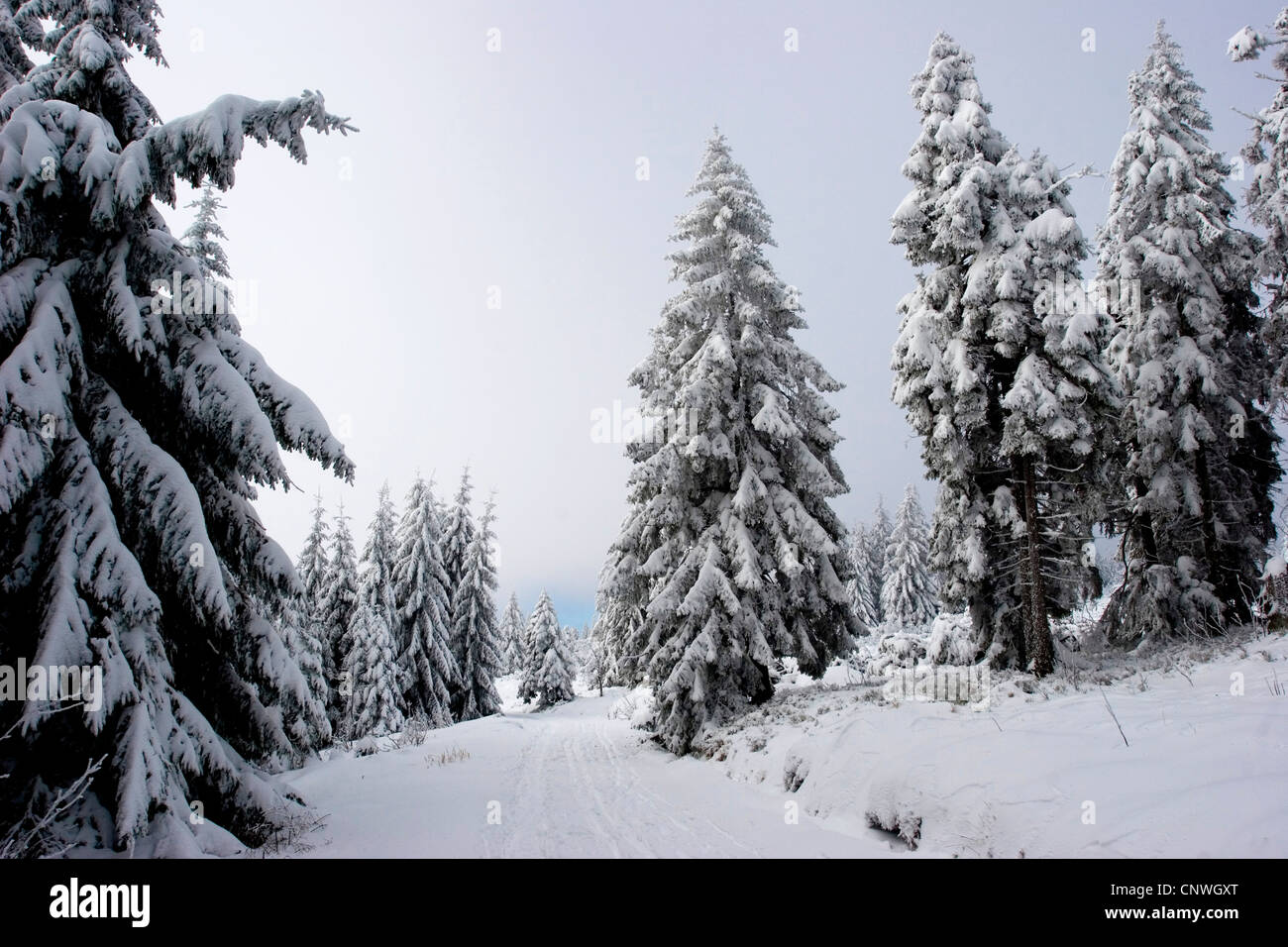 winter landscape in the Black Forest in Bannwald nature reserve, Germany, Baden-Wuerttemberg, Black Forest, NSG Stock Photo