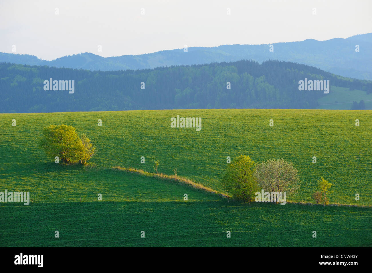 hill with meadows and groups of trees, Germany, Baden-Wuerttemberg, Black Forest, Schauinsland - Stock Image