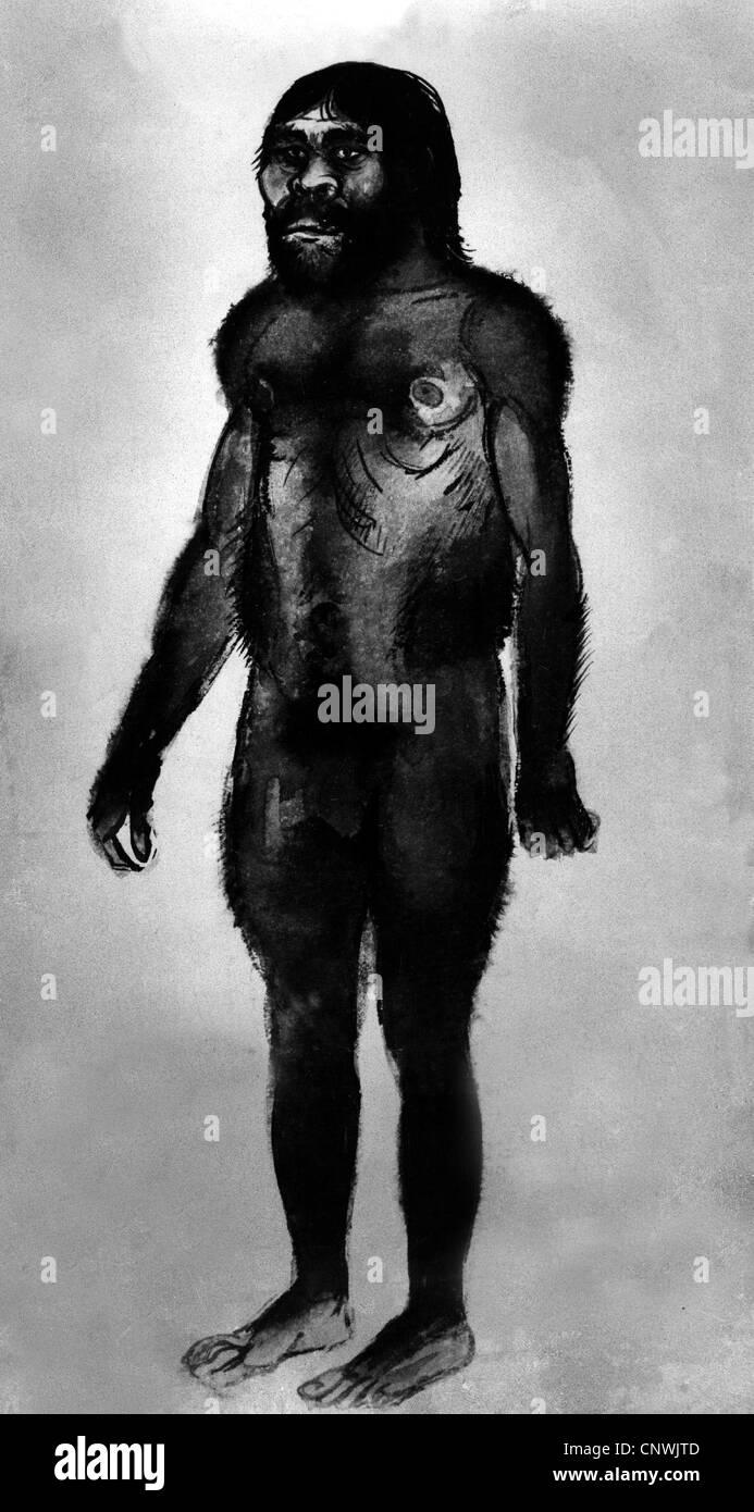 prehistory, people, illustration of a Homo habilis, caveman, prehistoric man, Pliocene, Pleistocene, extinct, historic, - Stock Image