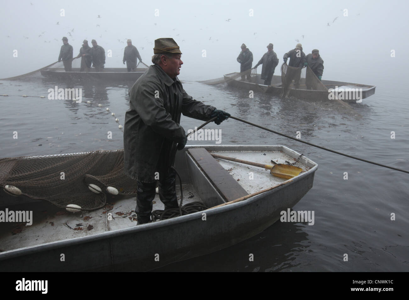 Traditional mass carp fishing at the Velky Tisy Pond in South Bohemia, Czech Republic. Stock Photo
