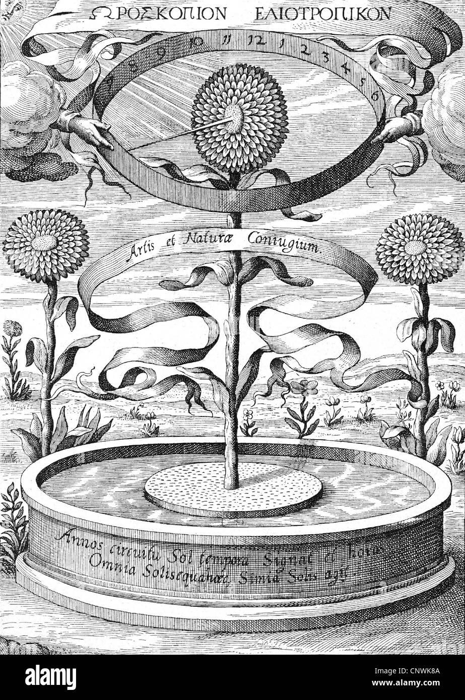 clocks, sundial, 'Horoscopium botanicum', sunflower as clock, copper engraving to 'De arte magnetica' - Stock Image