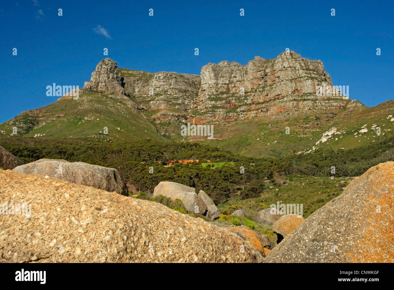 table mountain, South Africa, Western Cape, Table Mountain National Park, Capetown - Stock Image