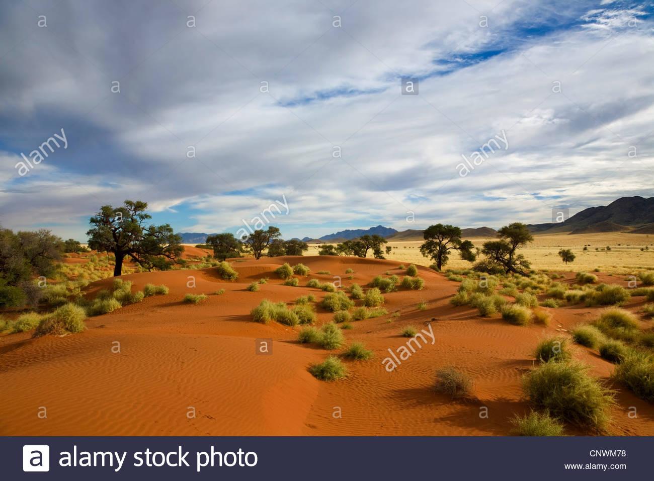 sand dune in morning light, Namibia, Namib Naukluft National Park - Stock Image