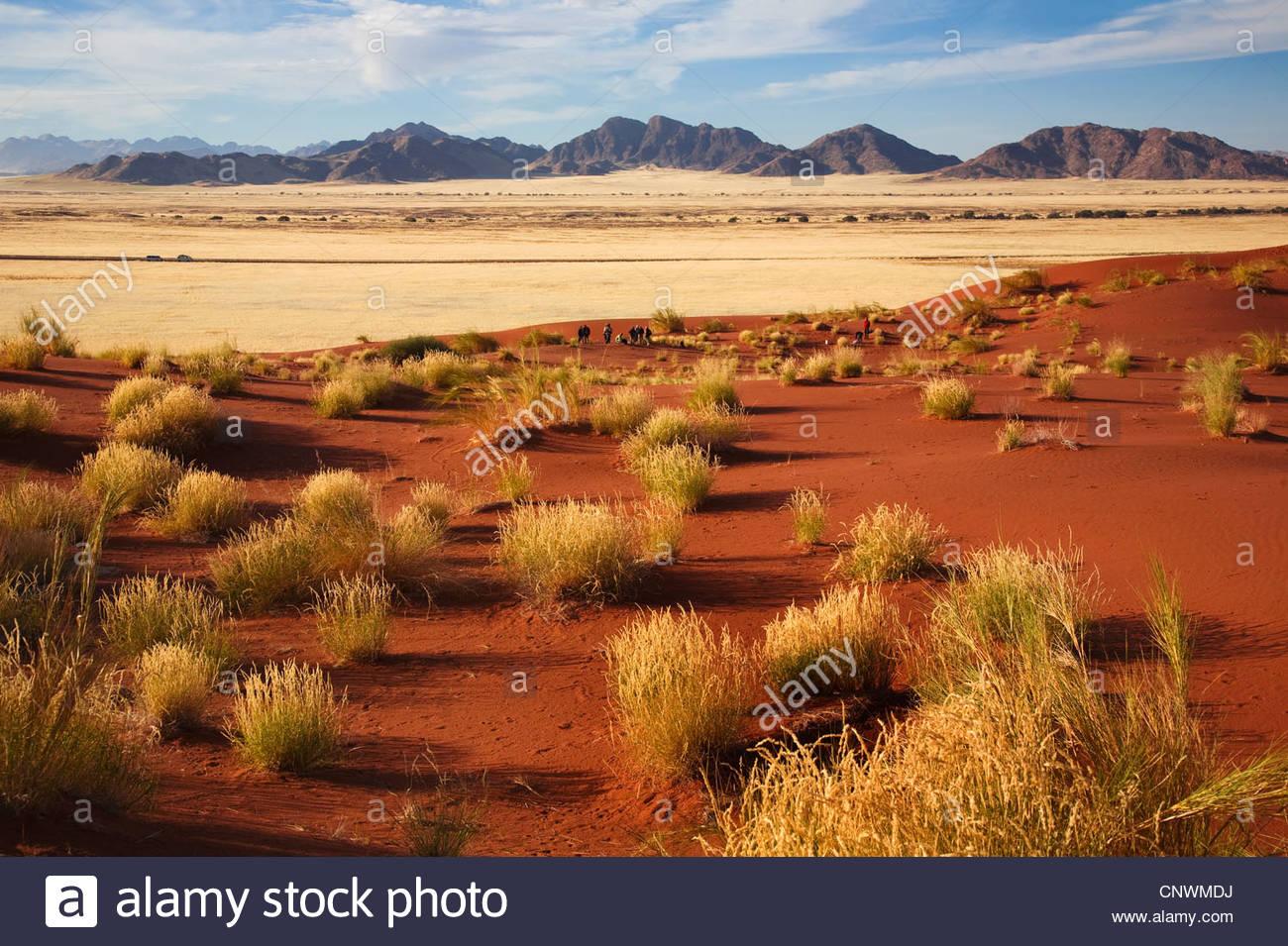 grasses in Namib desert, Namibia, Namibrand - Stock Image