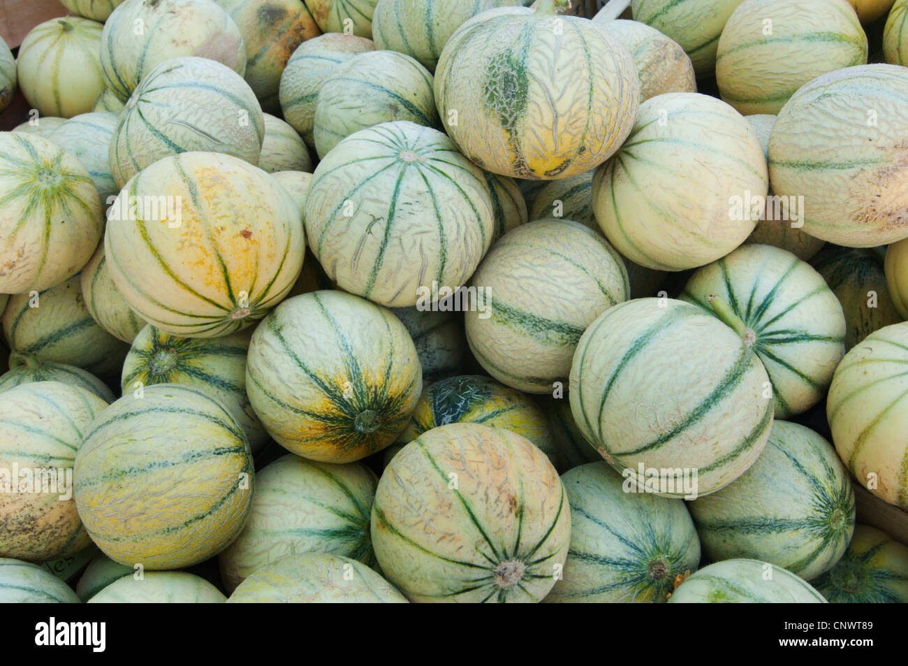 Cantaloupe melone (Cucumis melo var. cantalupensis), at the weekly market, France, Languedoc-Roussillon, Saint Gilles Stock Photo