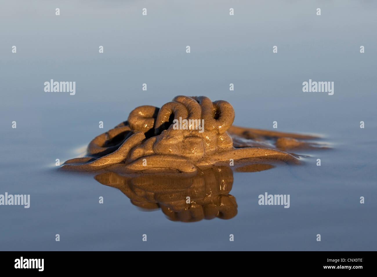 European lug worm, blow lug, lugworm (Arenicola marina), faeces in the wadden sea, Germany - Stock Image