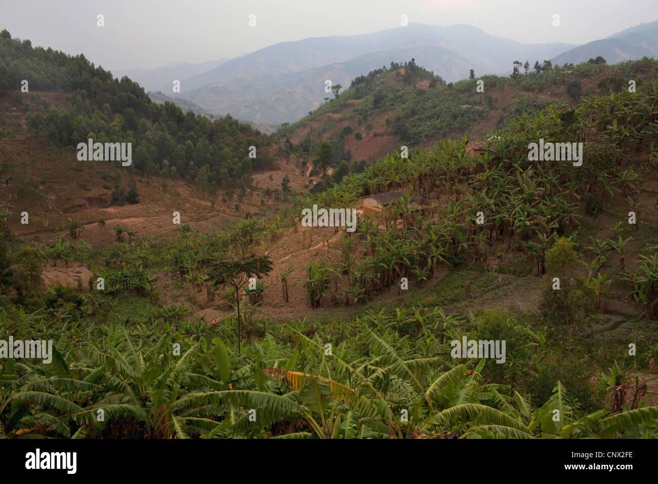 hilly landscape and banana fields, Burundi, Bujumbura Rural, Bugarama - Stock Image