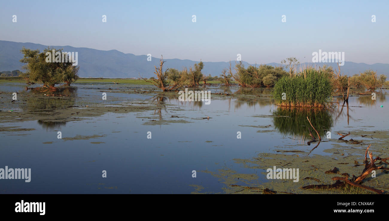 Lake Kerkini, Greece, Macedonia - Stock Image
