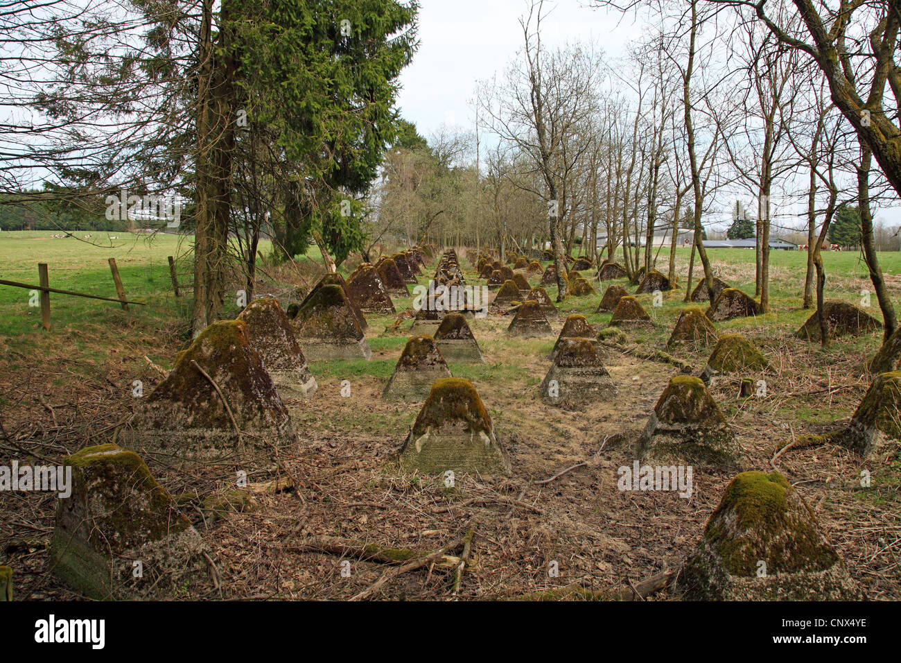 anti-tank obstacles near Hollerath belonging to the Westwall built in the Third Reich, Germany, Eifel, Hollerath - Stock Image