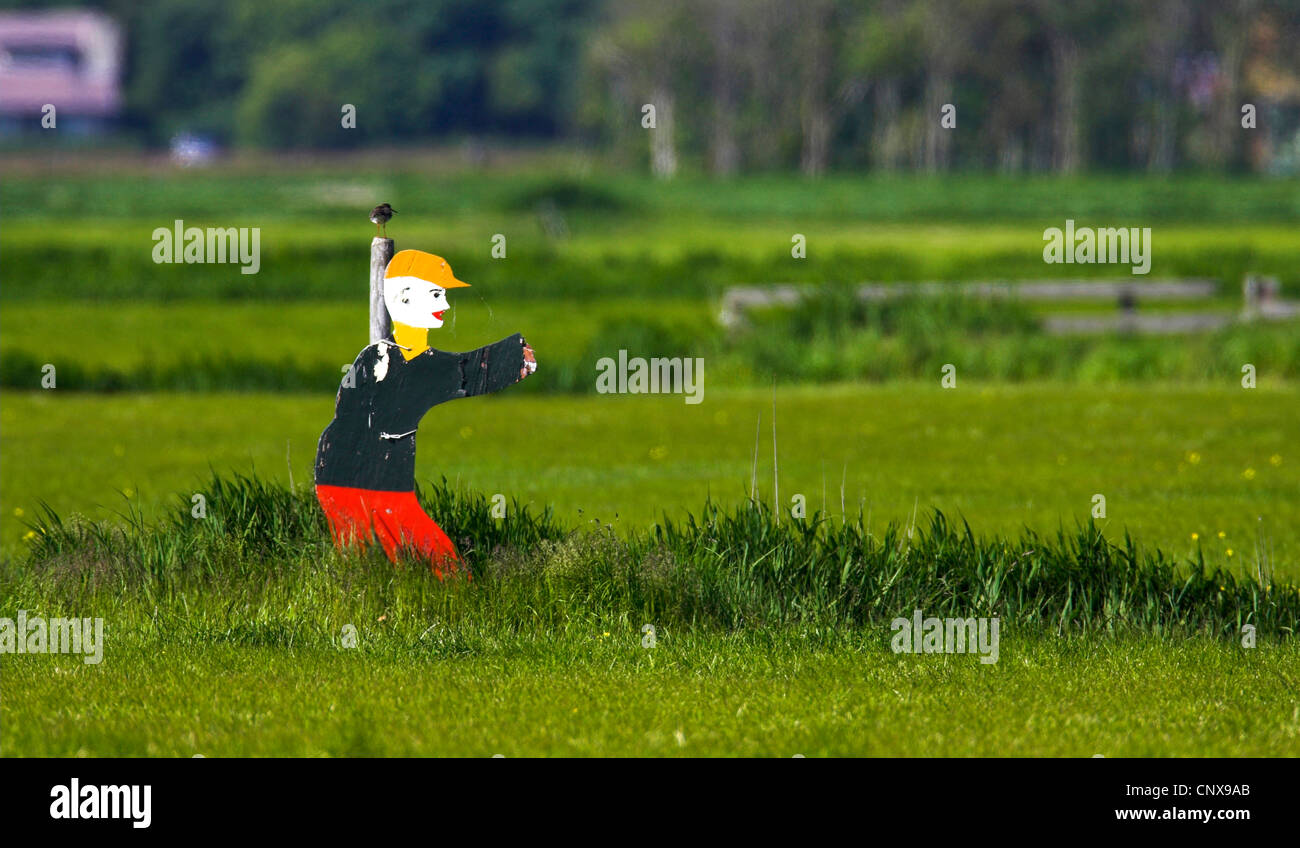 scarecrow on a field, Netherlands, Texel - Stock Image
